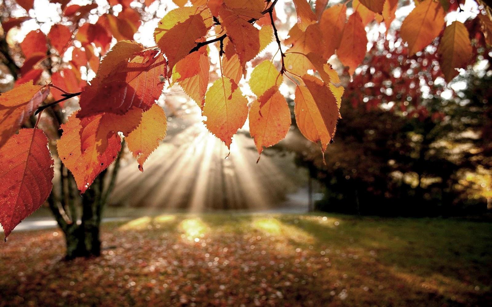 hd-mooie-herfst-achtergrond-met-herfstbladeren-en-een-opkomende-zon-hd-herfst-wallpaper-foto