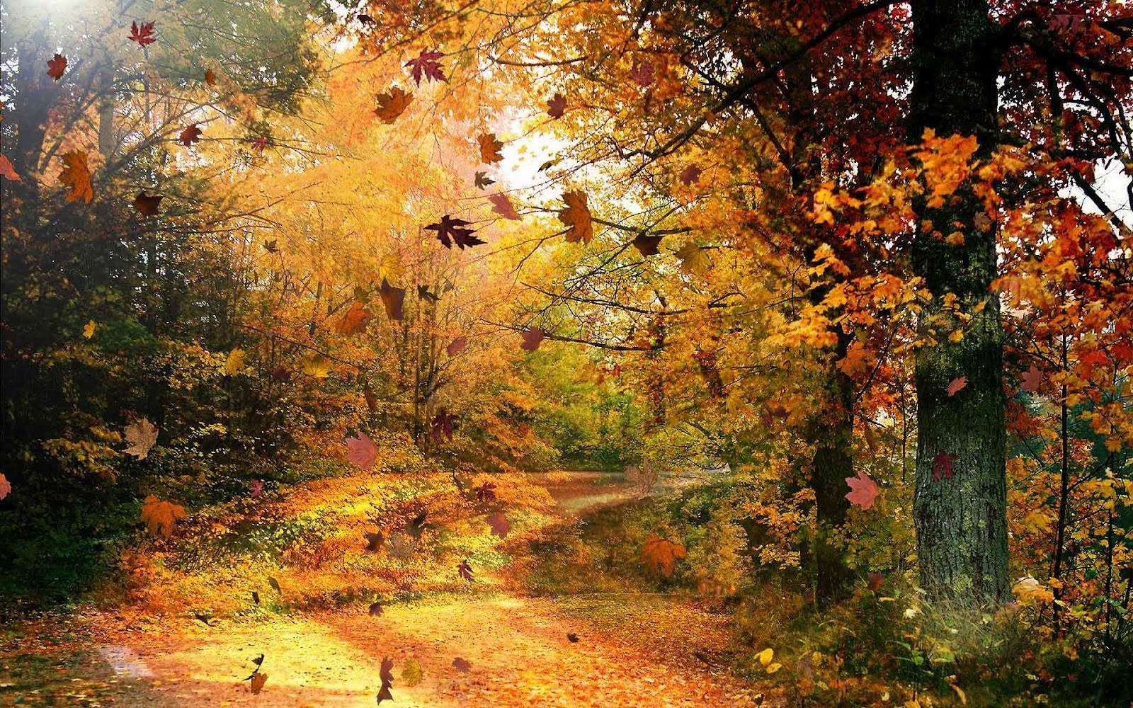 weg-bezaaid-met-herfstbladeren